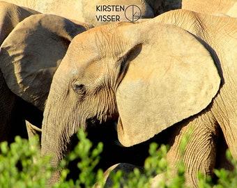 Elephant in Profile - Wildlife Photography