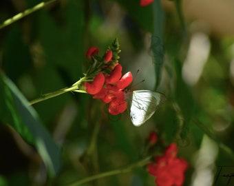 Butterfly Flower Photo Print