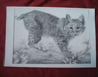 Bobcat On The Prowl Original Graphite Drawing by Chuck Hafner Print