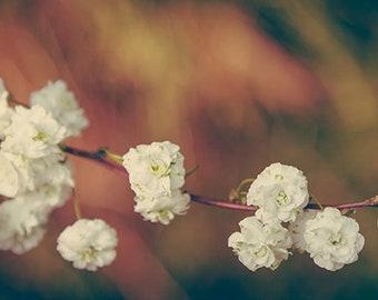 "Blossom Art Print, Spring flowers Photography, Fine Art Photography, Floral Wall Art, White Flowers Photo Print, ""Spring Blossom"""