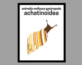 Mollusc Gastropod Snail Animal Kingdon Print Zoology Science Classification Biology Children