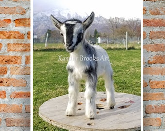 Printable goat photo Farmhouse decor, classy goat gift, rustic wall art, country decor, digital download, printable, baby goat, nursery,
