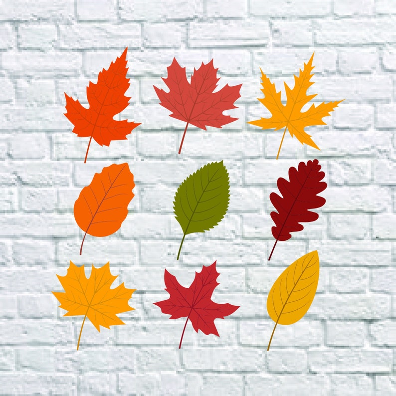 Buy 3 Get 1 Free 9 Fall Leaf Svg Leaves Autumn Svg Fall Etsy