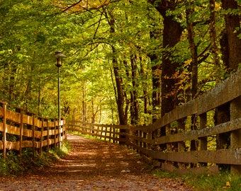 "Original photographic print ""Autumn Path"" by Emya photography"