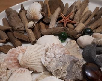 Seashell Craft Etsy