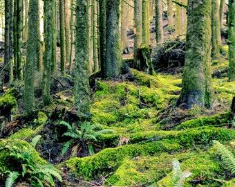 Mossy Pathway