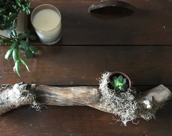 Driftwood, moss and stone planter