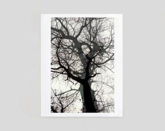 Winter Tree Fine Art Print Home Decor, 8x10