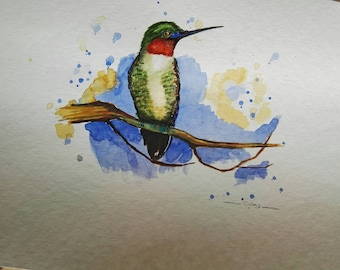 Colibri watercolor