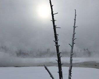 Solitary Tree in Winter|Yellowstone National Park|Wyoming|Snow|Wall Art|Home Decor