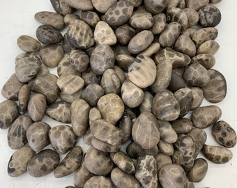 Individual Premium Raw Petoskey Stone - Beach Tumbled - Wedding Favors- Souvenirs - Stone