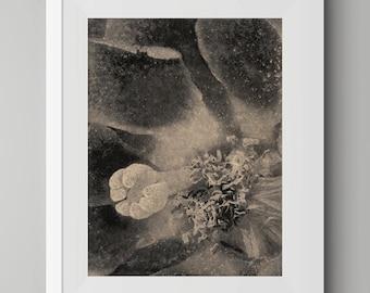 Etching, Intaglio Print, Original Art, Monochrome, Fine Art, Limited Edition, Cactus Flower No. 2