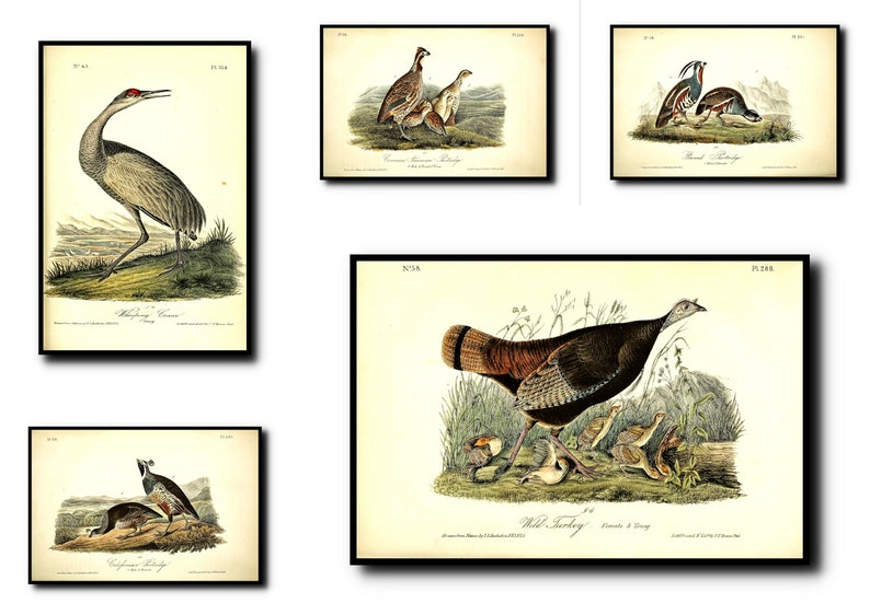 Bird Print Set of 5Bird Wall Art Bird ArtBird Wall ArtBird image 0