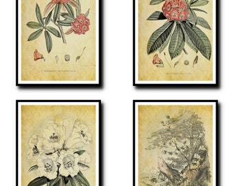 Antique Botanical Print Set of 4 - Plant Botanical Art Decor - Digital Art - Printable Art - Set Of Four Prints - INSTANT DOWNLOAD