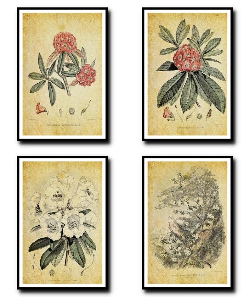 Antique Botanical Print Set of 4  Plant Botanical Art Decor  image 0