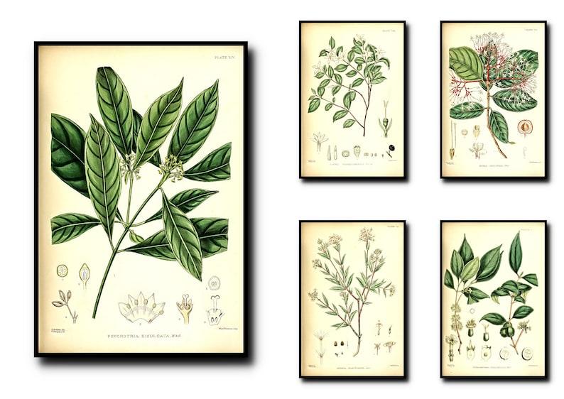 Antique Botanical Print Set of 5  Plant Botanical Art Decor  image 0