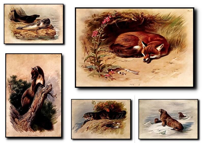 Animal Print Animal Wall Art Animal ArtAnimal Wall image 0