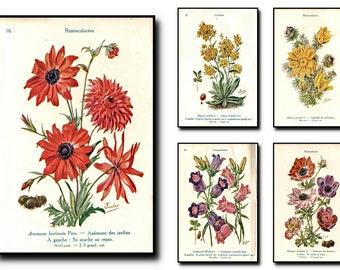 Botanical Print  Set Of 5,Botanical Wall Art, Botanical Art,Botanical Wall Art,Botanical Wall Decor -Botanical Wall Hanging -Wall Print