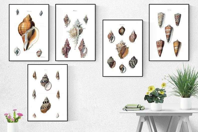 Shells Print Set Of 5Shells Wall Art Shells ArtShells Wall image 0