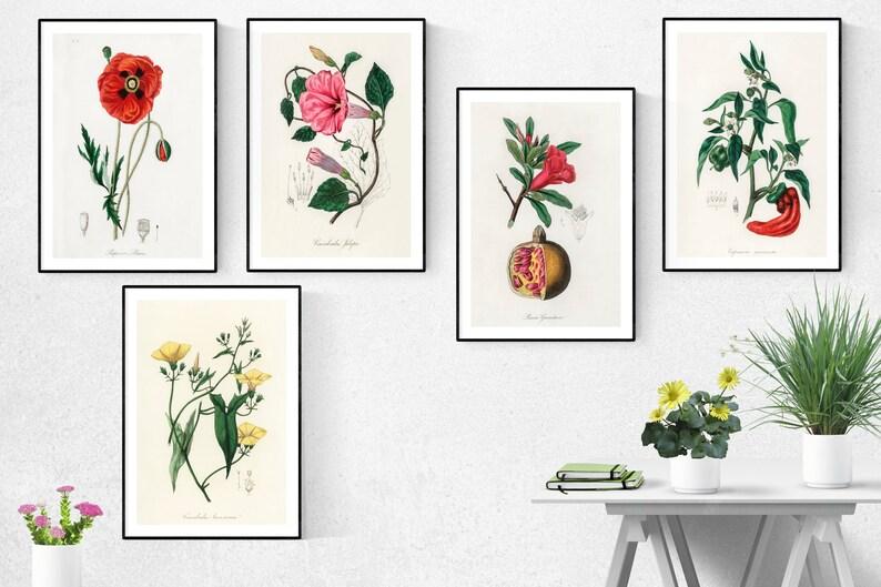 Medical Botany Print Set Of 5Medical Botany Wall Art Medical image 0