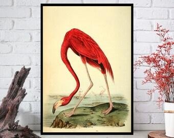 Flamingo Wall Art, Flamingo Wall Decor - Flamingo Wall Hanging - Flamingo Wall Print-Digital Art-Printable Art-Single Print-INSTANT DOWNLOAD