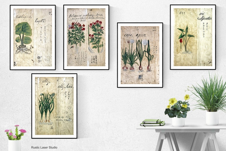Japanese herbal Print  Set Of 5Japanese herbal Wall Art image 0