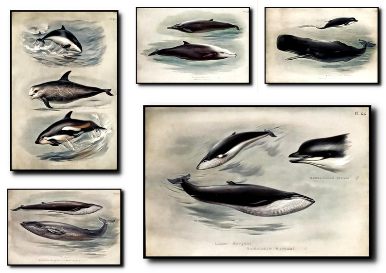 Whale Print Set of 5Whale Wall Art Whale ArtWhale Wall image 0