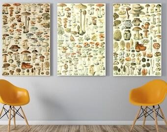 3  Mushroom Print,Mushroom Wall Decor -Mushroom Wall Hanging -Mushroom Wall Print - Digital Art - Printable Art -INSTANT DOWNLOAD