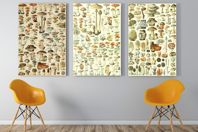 3  Mushroom PrintMushroom Wall Decor Mushroom Wall Hanging image 0
