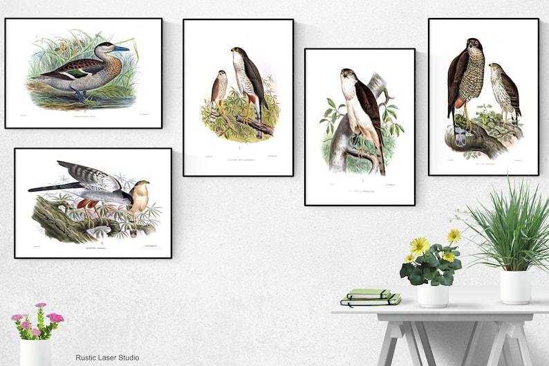 Bird Print  Set Of 5Bird Wall Art Bird ArtBird Wall image 0