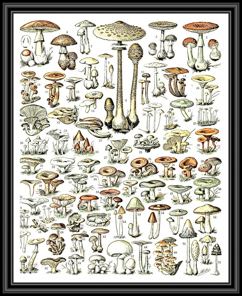 Mushroom PrintMushroom Wall Decor Mushroom Wall Hanging image 0