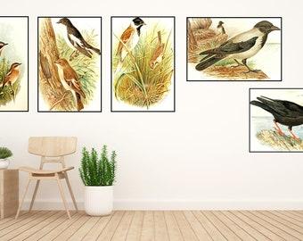 Bird Print  Set Of 5,Bird Wall Art, Bird Art,Bird Wall Art,Bird Wall Decor -Bird Wall Hanging -Bird Wall Print-Digital Art-Printable Art