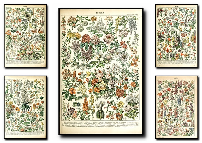 Botanical Print Set Of 5Botanical Wall Art Botanical image 0