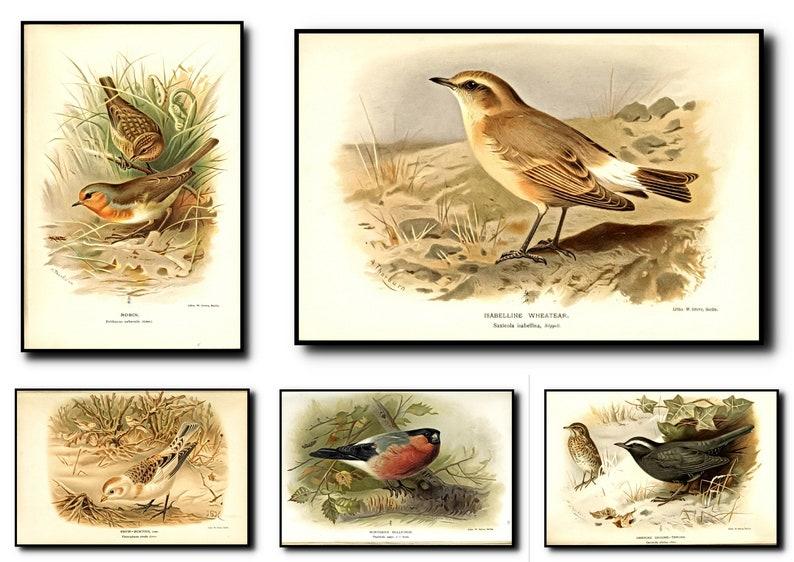 Birds Print Set of 5Birds Wall Art Birds ArtBirds Wall image 0