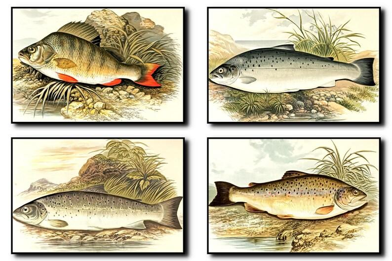 FishesPrint Set Of 4FishesWall Art FishesArtFishesWall image 0