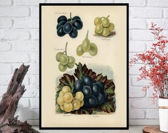 Fruit Wall Art,Fruit Wall Decor -Fruit Wall Hanging -Fruit Wall Print-Digital Art-Printable Art-Single Print-INSTANT DOWNLOAD