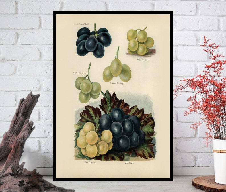 Fruit Wall ArtFruit Wall Decor Fruit Wall Hanging Fruit image 0