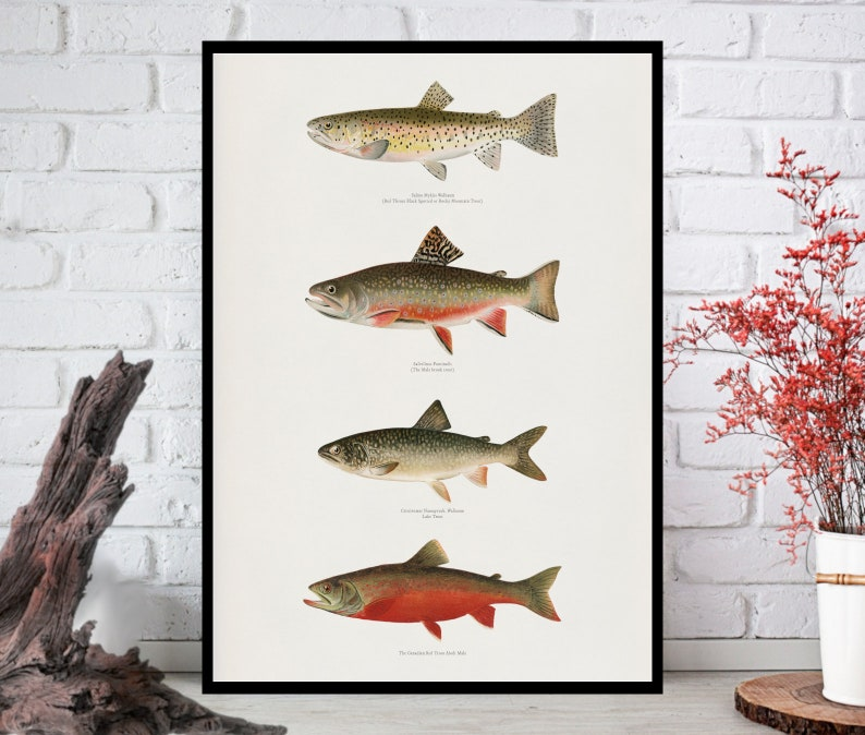 Fishes PrintFishes Wall Art Fishes ArtFishes Wall Decor image 0