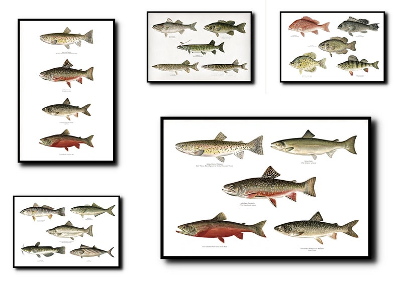 Fishes Print Set of 5Fishes Wall Art Fishes ArtFishes Wall image 0