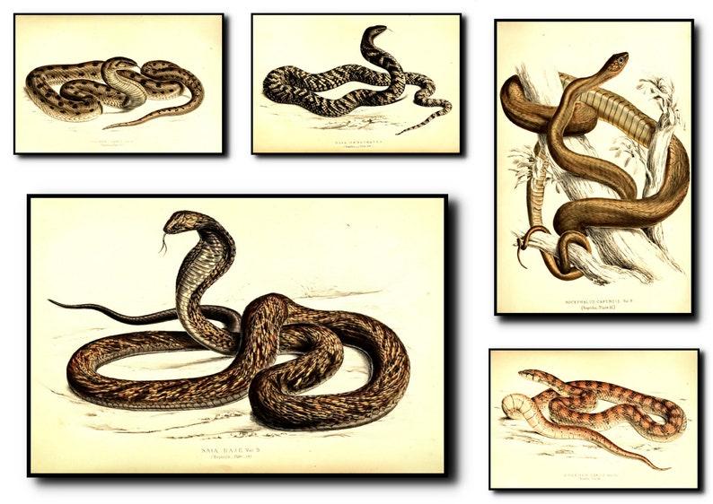 Snake Print Set Of 5Snake Wall Art Snake ArtSnake Wall image 0