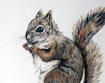 Red Squirrel - Original Colored Pencil Drawing Art