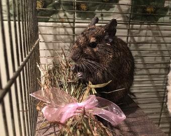 Dried grass, natural grass, food for rabbits, bunny food, bunny rabbit, rabbit treat, farm birthday, birthday party
