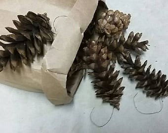 Real Pine Cones, Small, Medium and Large, Natural Brown, Decoration Ornament Centerpiece Rustic Crafting Wedding Easter Fall Christmas