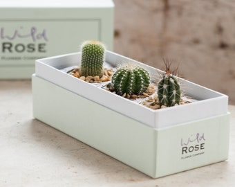 The Cacti Garden in a Beautifully Crafted Gift Box