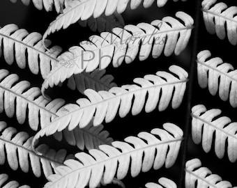 Fern Macro shoot Black and white Photo Print
