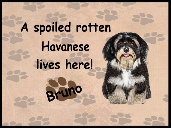 Havanese  Tea for the Havanese    lover   in collectible tin
