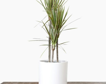 """Large Plant Pot - Indoor Planter 