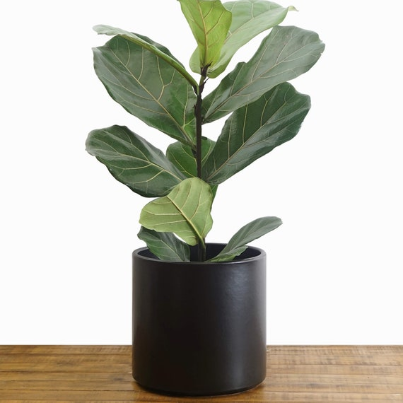 Black Planter Large Indoor Plant Pot Flower Pot Modern Etsy