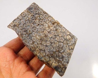 1005 Cts. 100% Natural Grey Fossil Coral Rough Minerals Specimen RM5482