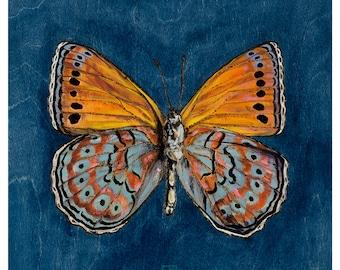 Butterfly Art Print | Harlequin Butterfly | Orange Denim Blue Butterfly Wall Decor